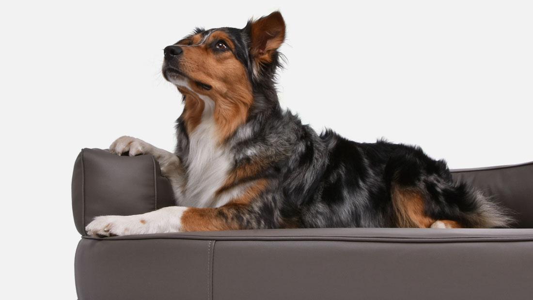hundebett-atlanta-kunstleder-3