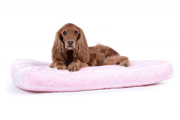 Innenkissen für Hundekissen (HWBC/100% Visco)