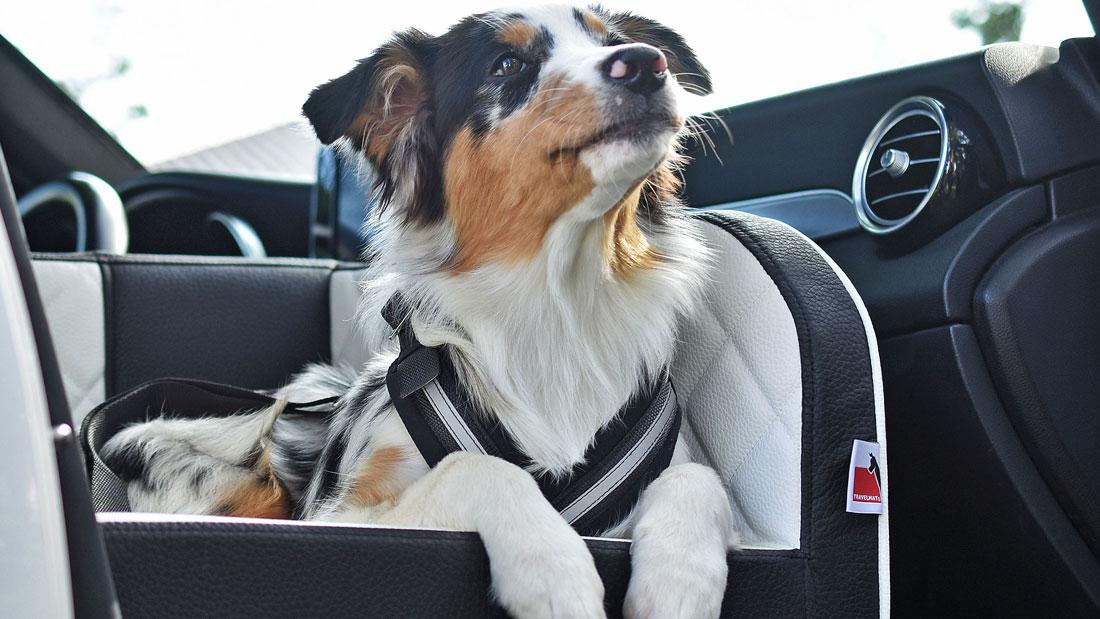 sicherungsgurt-travelmat-autohundebett