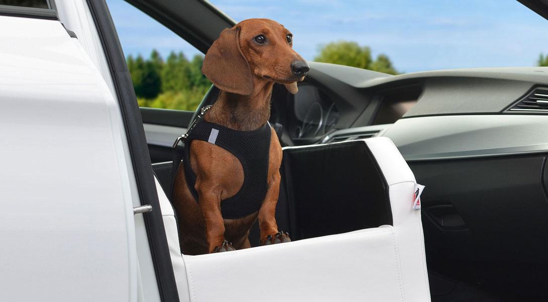 autohundebett travelmat vordersitz